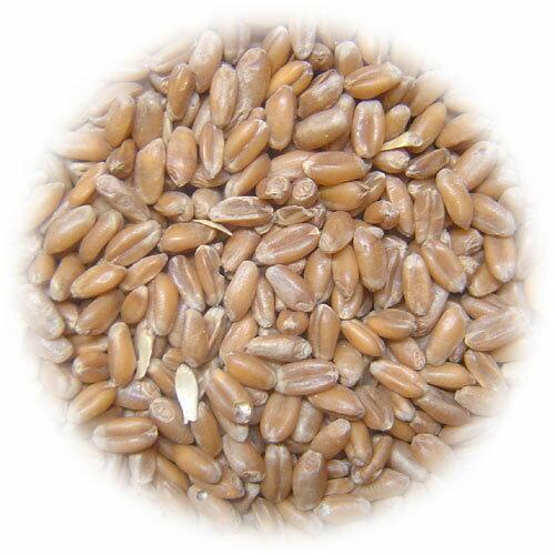 【国産】小麦 1kg