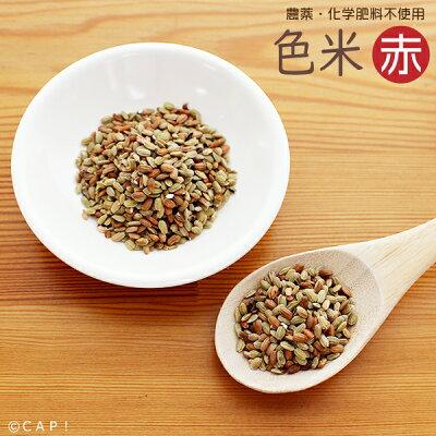 【熊本県産】色米赤100g