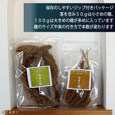 jas-shiroho50
