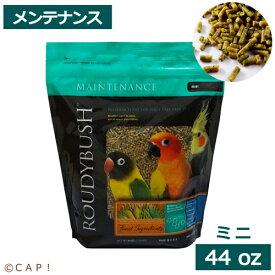 賞味期限:2021/11/21 ラウディブッシュ デイリーメンテナンスミニ 44oz(1.25kg)
