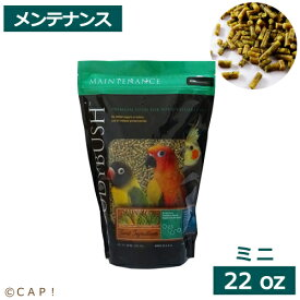 賞味期限2023/3/11ラウディブッシュ デイリーメンテナンス ミニ 22oz(624g)