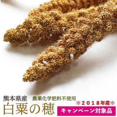 【熊本県産】有機JAS認定品白粟の穂100g2018年産※緑ラベル※