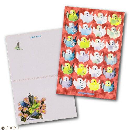 【piyopiyobrand】ポストカード セキセイインコ24羽 カラー:赤