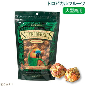 賞味期限2021/10/6 ラフィーバー トロピカルフルーツ パロット(10oz/284g)