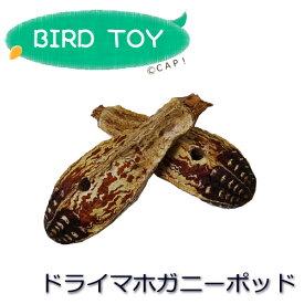 【パーツ】ドライマホガニーポッド 1個
