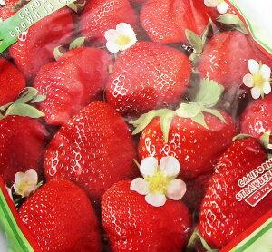 ★ホールイチゴカルフォルニア冷凍イチゴ大粒2.72kgフレッシュジューススムージーにも★