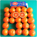 【25個分の真っ赤なブラッドオレンジ果汁が搾りたて!!】オルトジェル社ブラッドオレンジジュース1リットル入り