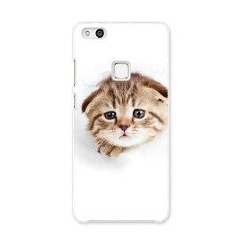 Huawei p10 lite ファーウェイ p10 ライト simfree SIMフリー スマホ カバー ケース スマホケース スマホカバー PC ハードケース 猫 写真 子猫 013568