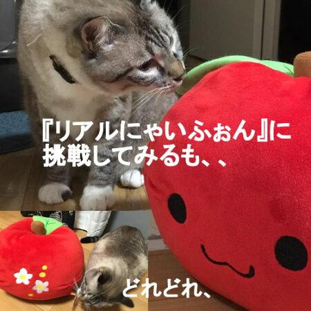 スマホケース猫