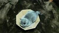 猫爪とぎ8角形型日本製国産ねこなべ猫鍋猫の爪とぎ爪みがきストレス解消ベッドペットベッドダンボール段ボール爪やすり爪研ぎキャットランド楽天[PC]【D】あす楽