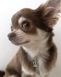 【犬と生活】チャームクラウンL※お取り寄せ商品【TC】