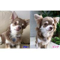 【犬と生活】チャームスマイルXSピンク・ブルー※お取り寄せ商品【TC】