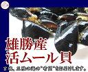 宮城 雄勝産 殻付きムール貝/2kg/黒く輝く旨味の宝庫