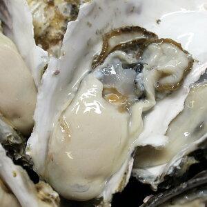 牡蠣 訳あり 送料無料 宮城産 殻付き牡蠣 1kg 生食