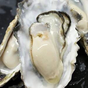 牡蠣 訳あり 送料無料 宮城産 殻付き牡蠣 2kg 生食