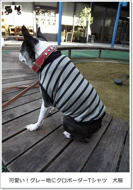 【犬服オリジナル・ダックスサイズ】普段着に・グレー地にクロボーダーTシャツmrfw0202d #犬服通販 #ダックスフンド #ミニチュアダックスフンド