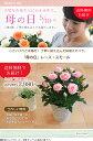 【母の日】天皇杯受賞!送料無料★レース・スモール!小さいけれど本格的!感謝の気持ちを届けるバラの鉢植え♪ 花色指定OK 母の日 ギ…