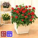 ※陶器入荷待ち 5月中旬以降 <専門店のバラの鉢植え> 花色が選べる 送料無料 リエールスクエア 誕生日プレゼント 結婚記念日 女性 …
