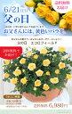 【父の日】天皇杯受賞 送料無料 エコロ・フィールド 黄色いバラ イエロー ガーデニング 感謝の気持ちを届ける鉢植え コロナに負けない …