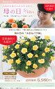 【母の日】天皇杯受賞!送料無料★エコロ・フィールド!ナチュラル、お花いっぱい♪感謝の気持ちを届けるバラの鉢植え♪ 花色指定OK …
