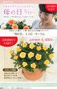 【母の日】送料無料★エコロ・サークル!ナチュラル、やさしい印象♪感謝の気持ちを届けるバラの鉢植え♪