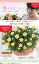 【母の日】送料無料★エコロ・フィールド!ナチュラル、お花いっぱい♪感謝の気持ちを届けるバラの鉢植え♪