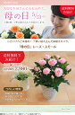 【母の日】送料無料★レース・スモール!小さいけれど本格的!感謝の気持ちを届けるバラの鉢植え♪