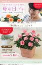 【母の日】送料無料★エコロ・スクエア!ナチュラル、シャープな印象♪感謝の気持ちを届けるバラの鉢植え♪
