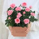 <専門店のバラの鉢植え> 花色が選べる 送料無料 エコロスクエア 誕生日プレゼント 結婚記念日 女性 誕生日 母 祖母 ギフト 花 自宅用…