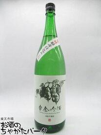 【焼酎祭り1680円均一】 白金酒造 白金吟酒 吟醸酵母 芋焼酎 25度 1800ml