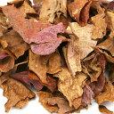 国産アンブレラリーフ ちぎりタイプ 約30g マジックリーフ(アピスト ベタ ビーシュリンプ) 関東当日便