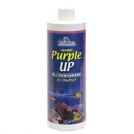 カリブシー カミハタ パープルアップ 480ml 海水用 添加剤 石灰藻 珊瑚 育成 関東当日便