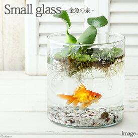 (金魚)私のアクアリウム 〜 金魚の泉 〜 スモールグラス(直径14.0×H15.0cm)琉金1匹 本州四国限定