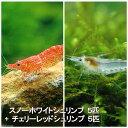 (エビ)チェリーシュリンプ ハーフ&ハーフ ver.朱&白(各5匹) 北海道航空便要保温