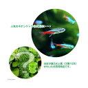 (熱帯魚)(水草)ネオンテトラ(20匹) +おまかせ水上葉3種セット 計10本  北海道・九州・沖縄航空便要保温