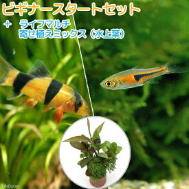 (熱帯魚)(水草)ビギナースタートセット ラスボラ・エスペイ(6匹) +クラウンローチ(2匹) 北海道・九州航空便要保温