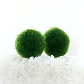 (水草)マリモ Mサイズ(無農薬)(2個)