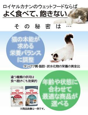 箱売りロイヤルカナンFHN−WETユリナリーケア85g1箱48袋9003579000366関東当日便