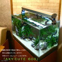 AXY CUTE (アクシー キュート) 600 WW(ホワイト球) PL36W 60cm水槽用照明 ライト 熱帯魚 水草 関東当日便