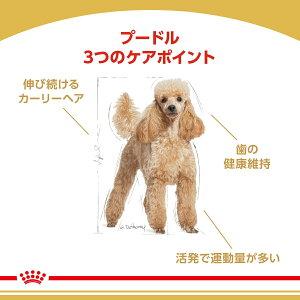 ロイヤルカナンプードル成犬・高齢犬用3kg【正規品】【関東当日便】