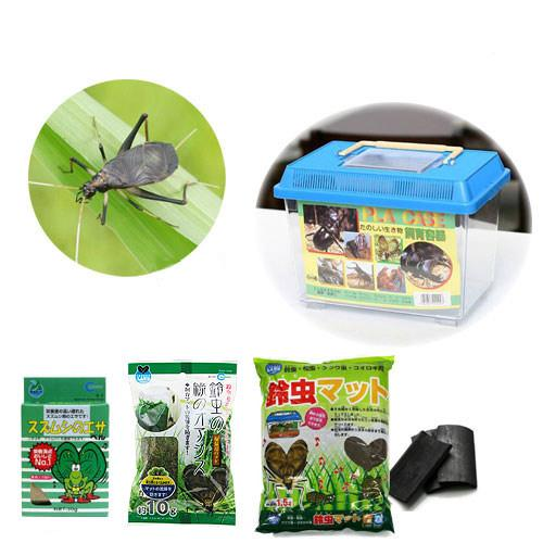 (昆虫)鈴虫付き飼育セット(小) スズムシ 飼育セット 本州・四国限定