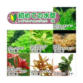 (水草)初めての水草 レイアウトチャレンジセット 7種(水上葉)