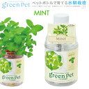 育てるグリーンペット ハーブ ミント 家庭菜園 キッチン菜園 室内園芸 関東当日便