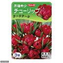 (観葉植物)チューリップ球根 原種希少チューリップ テータテータ 3球詰(1袋)