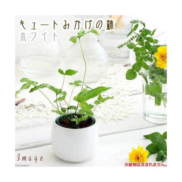 キュートみかげの鉢 ホワイト(φ7.0×H7.0cm)(ハイドロ苗6φに対応) 関東当日便