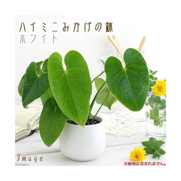 ハイミニみかげの鉢 ホワイト(φ9.5×H9.0cm)(ハイドロ苗9φに対応) 関東当日便