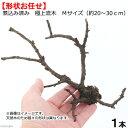 形状お任せ 煮込み済み 極上流木 Mサイズ(約20〜30cm)1本 関東当日便