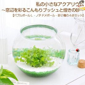 (水草)私の小さなアクアリウム 窓辺を彩るこんもりブッシュと煌きの砂 本州四国限定 お一人様2点限り
