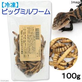 冷凍★冷凍ビッグミルワーム 100g 爬虫類エサ 無添加 無着色 別途クール手数料 常温商品同梱不可