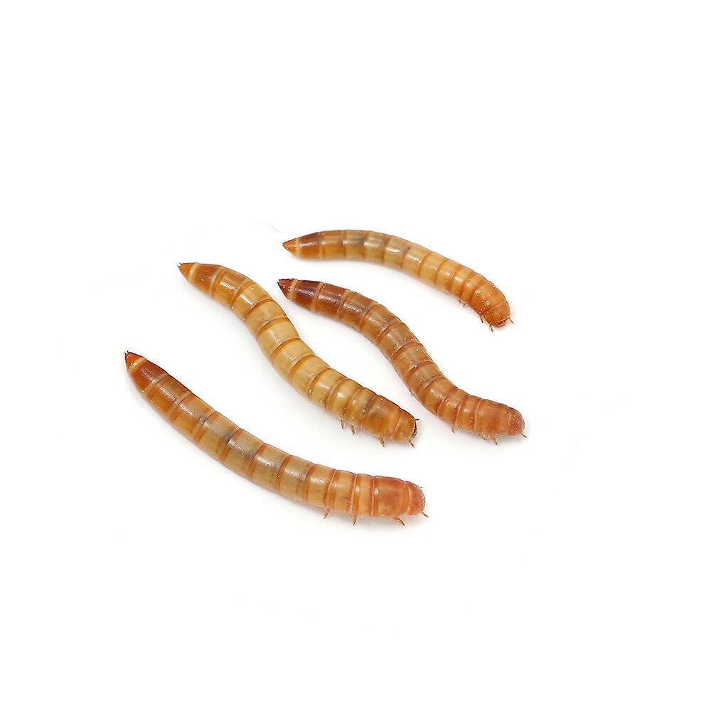 (生餌)ミルワーム 3カップ分 プロバグズシルクワーム蛹試供品付